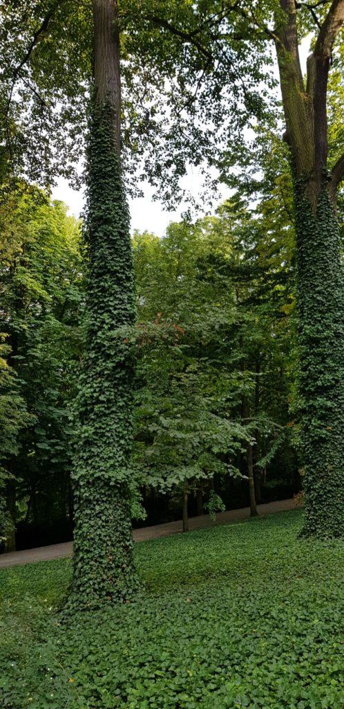 The Royal Łazienki Park (5)